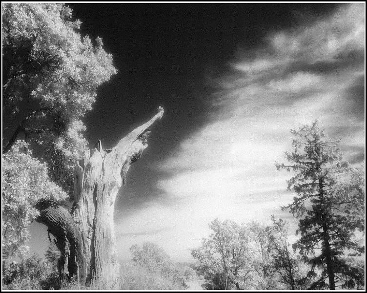 Landscape Photograph - Tree And Sky by Paul Aiello