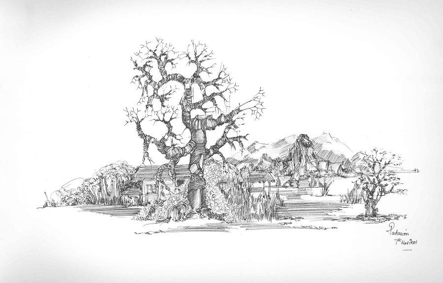 Landscape Drawing - Tree And Some Rocks by Padamvir Singh