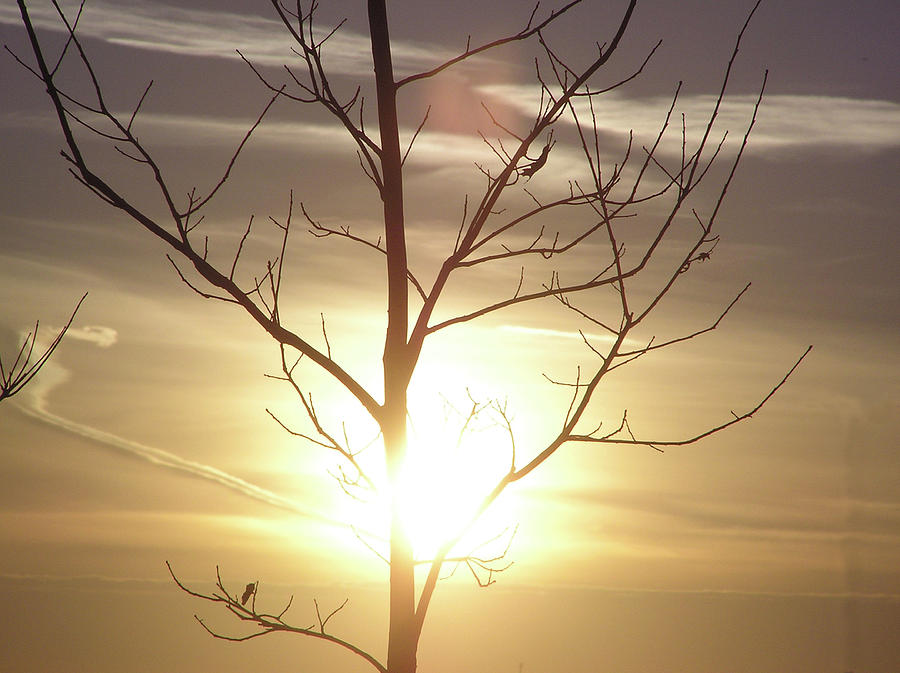 Sun Photograph - Tree And Sun by Richard Mitchell