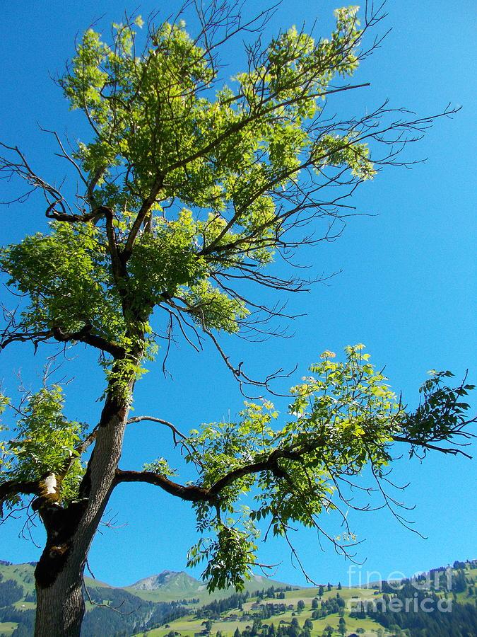 Tree Photograph - Tree Art 1 by Angelika Heidemann