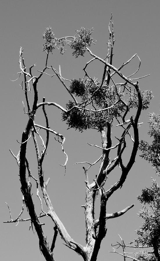 Tree Photograph - Tree Art Black And White 031015 by Edward Dobosh