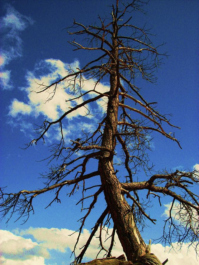 Tree Photograph - Tree At Bryce Canyon Utah. by Martina Fagan
