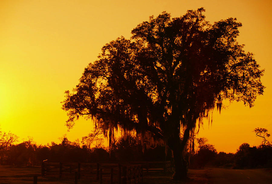 Arcadia Photograph - Tree At Dawn by Heidi Berkovitz
