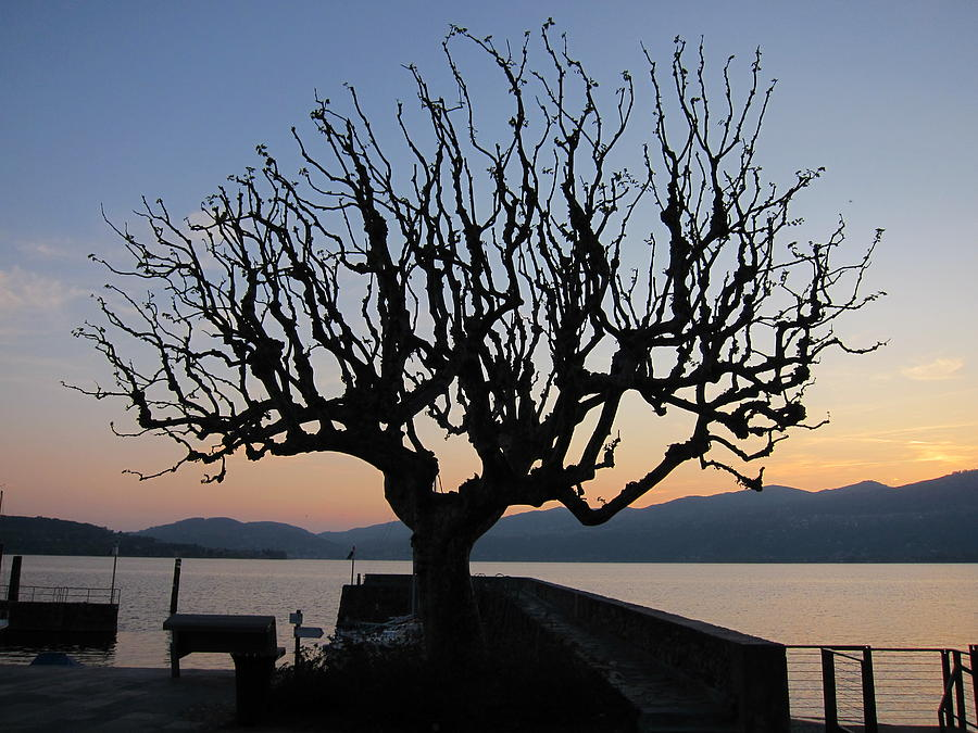 Sunset Photograph - Tree At Harbour by Alberto V  Donati