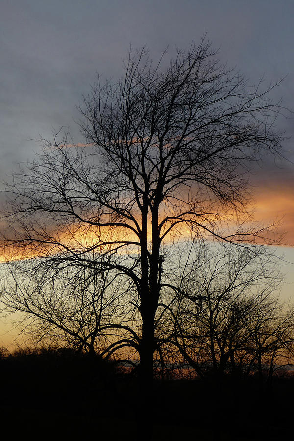 Tree Photograph - Tree At Sunset by Jerry Weinstein
