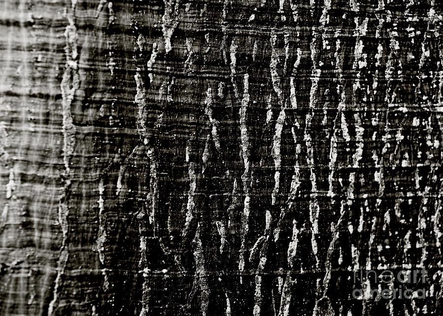 Abstract Photograph - Tree Bark by Charmian Vistaunet