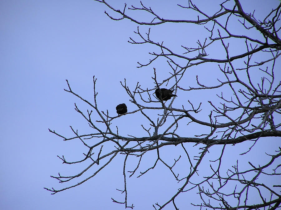 Tree Photograph - Tree Birds And Sky by Richard Mitchell