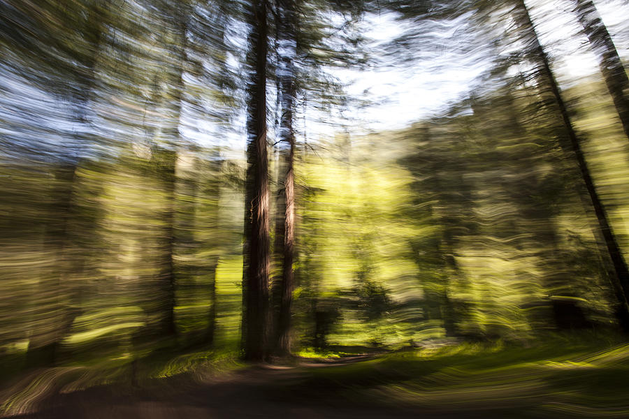 California Photograph - Tree Blur 1 by Bryan Toro