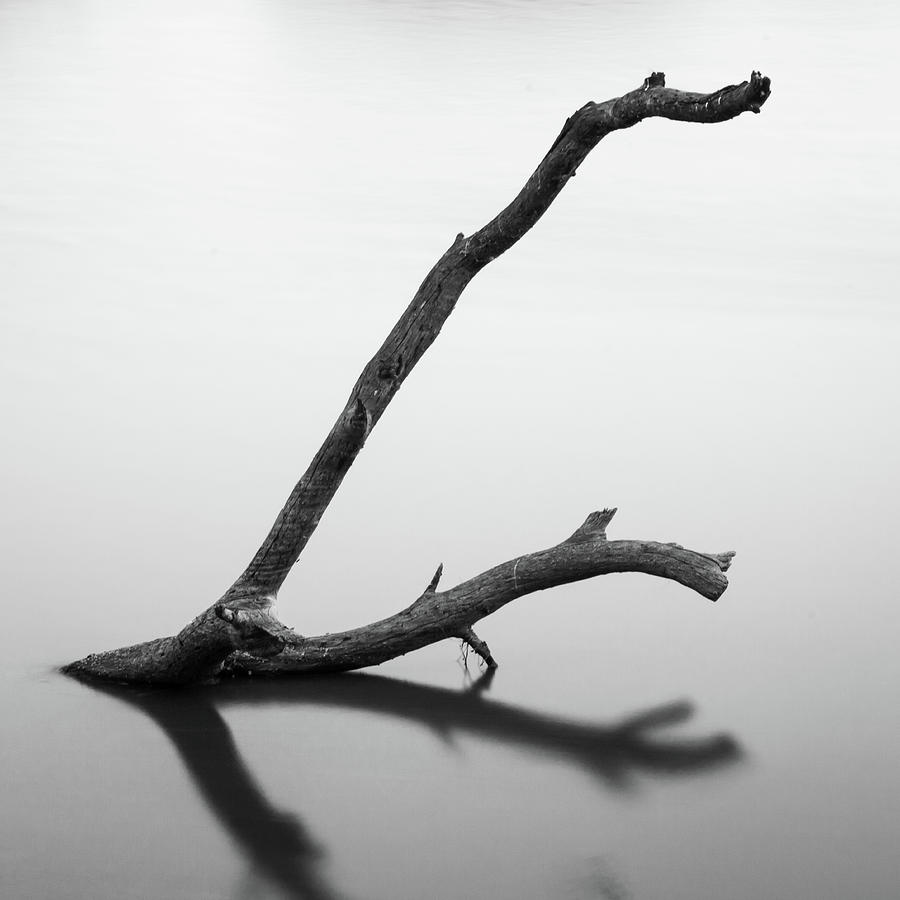 Tree Branch on the Water by Mahesh Balasubramanian
