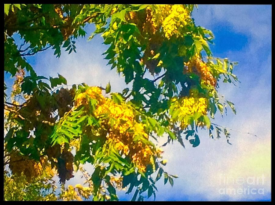 Tree Photograph - Tree Branch With Leaves In Blue Sky by Debra Lynch