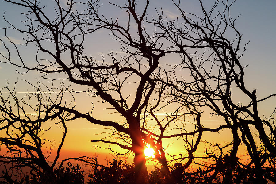 Tree Branches Dancing In The Sunlight Photograph
