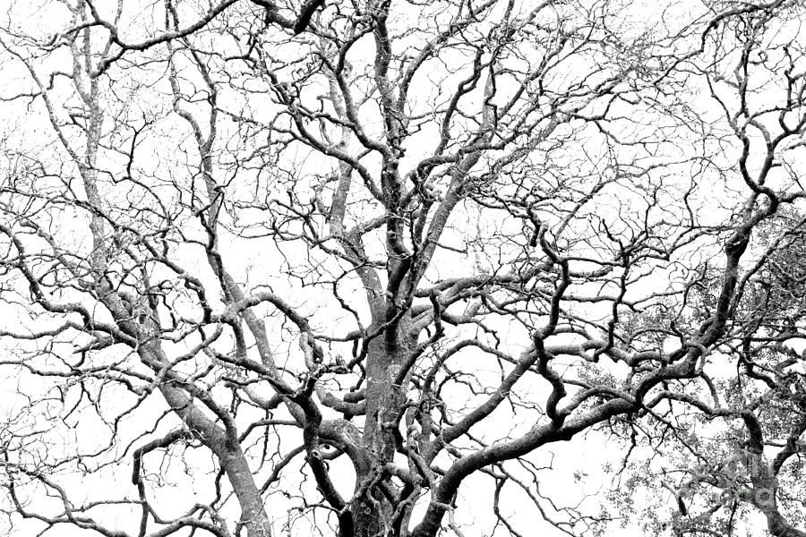 Tree Photograph - Tree Branches by Gaspar Avila