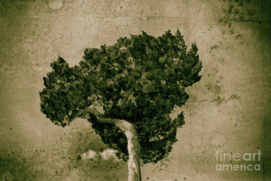 Tree Photograph - Tree Broccoli  by Steven Digman