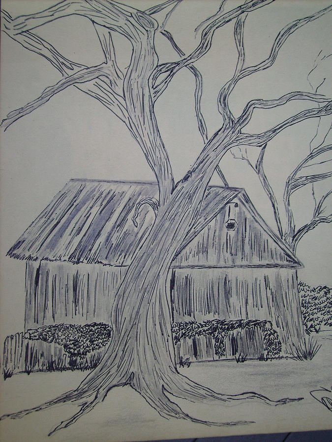 Landscape Drawing - Tree By Jacobs Barn by Karen Salley-Rice