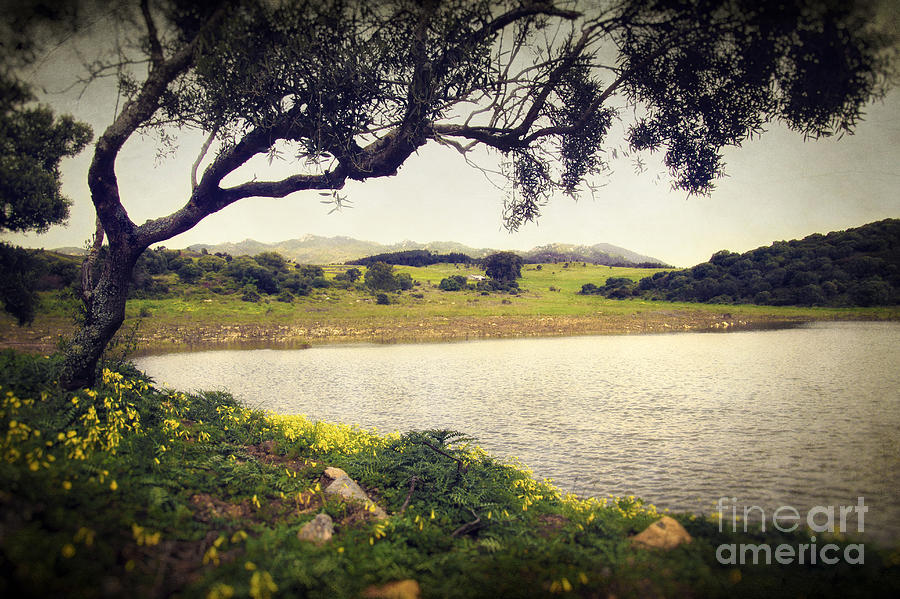 Nature Photograph - Tree By The Lake by Carlos Caetano