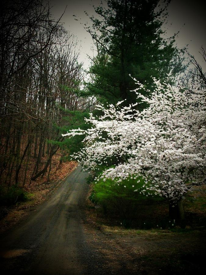 Flowers Photograph - Tree By The Road by Joyce Kimble Smith