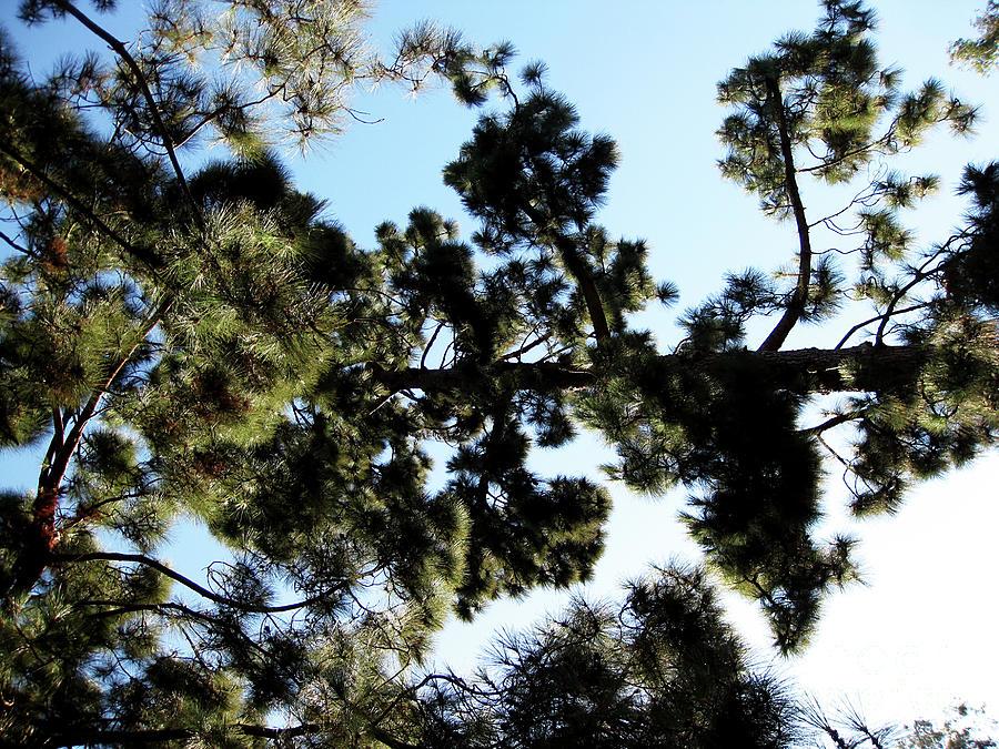 Beauty Photograph - Tree Canopy by Karen Sydney