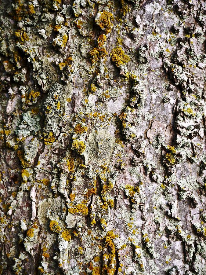Bark Photograph - Tree Trunk Detail by Lara Morrison