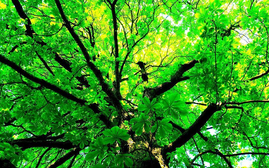 Tree Digital Art - Tree by Dorothy Binder