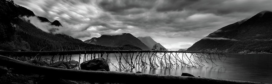 Tree Fall at Alouette Lake by Brad Koop