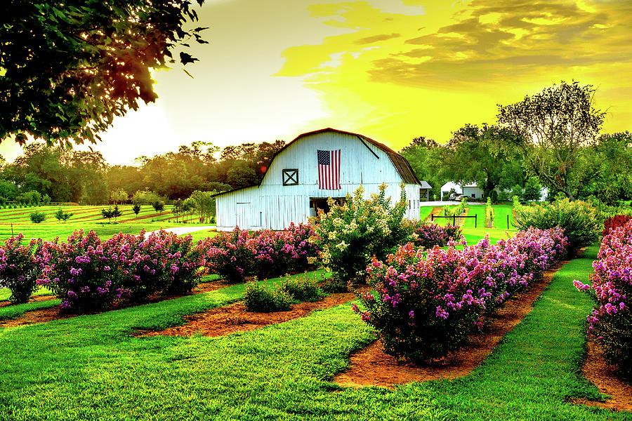 Farm Photograph - Tree Farm by Mike Landrum