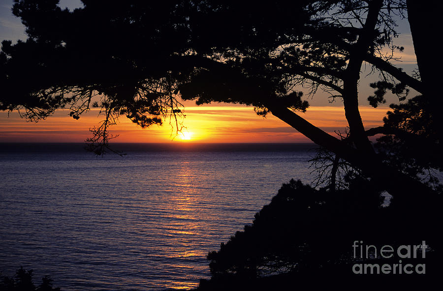 Black Photograph - Tree Framing Seascape Sunset by Ali ONeal - Printscapes