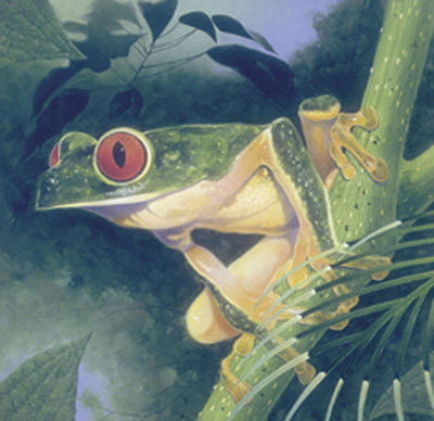 Tree Frog Painting - Tree Frog by Durwood Coffey