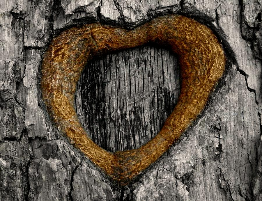 Wood Photograph - Tree Graffiti Heart by Chris Berry