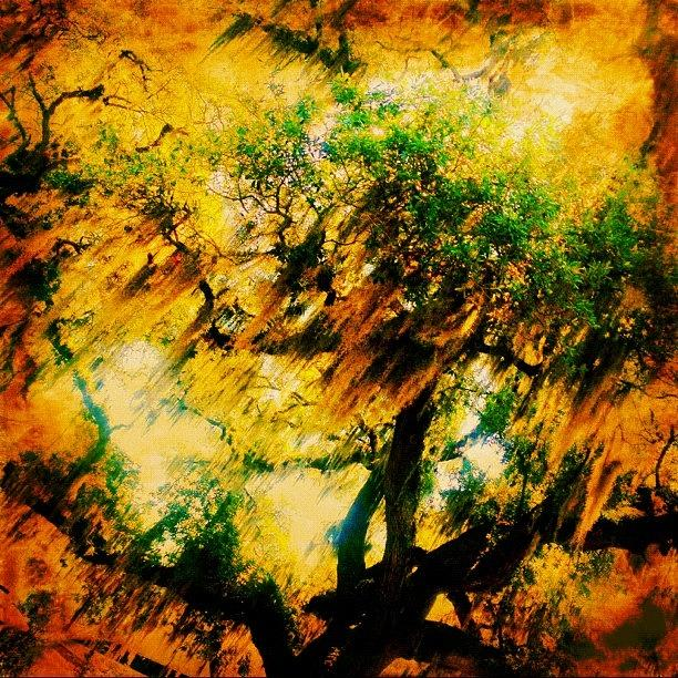 Driving Photograph - #tree #green #yellow #colourful #sc by Katie Williams