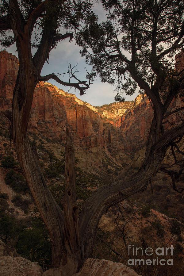 Tree Heart by Jane Axman