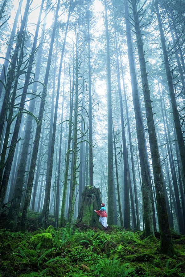 Canada Photograph - Tree Hugger by Windy Corduroy