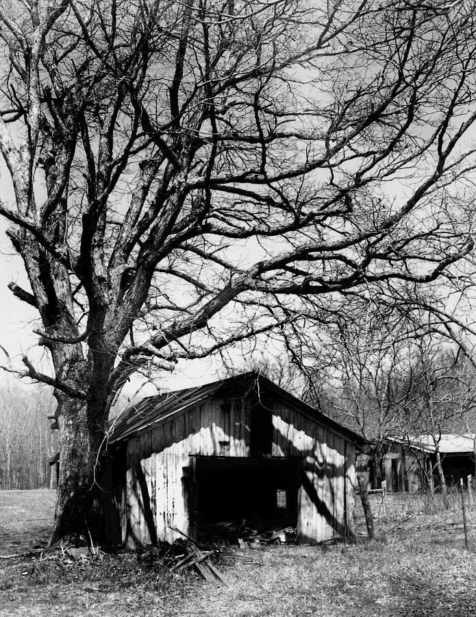 Ansel Adams Photograph - Tree-hut by Curtis J Neeley Jr