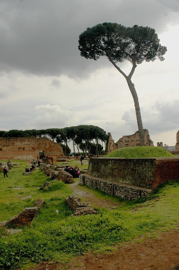 Tree Photograph - Tree In Ancient Rome Landscape by Joseph Cossolini
