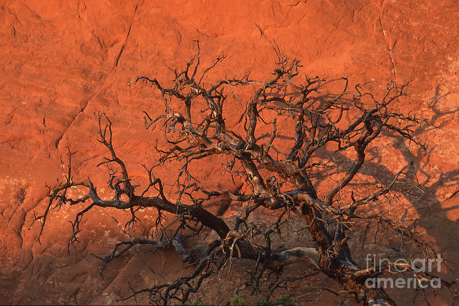 Utah Photograph - Tree In Arches by Stan and Anne Foster