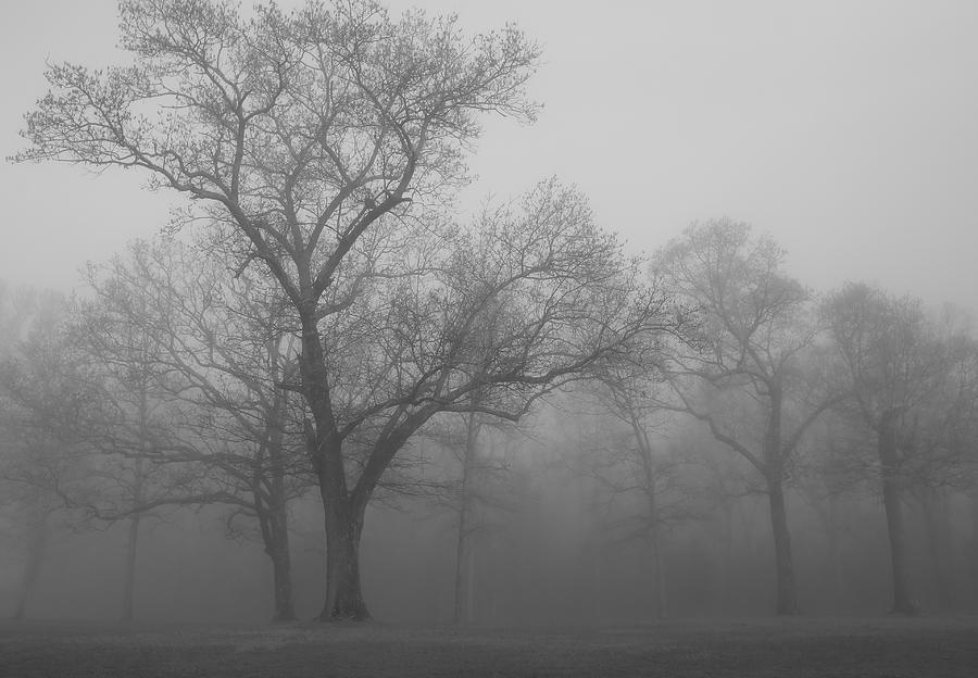 Tree Photograph - Tree In Black And White by James Jones
