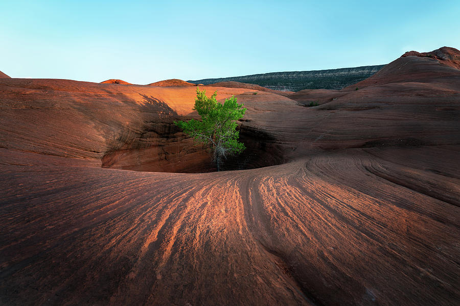 Tree in Desert Pothole by James Udall