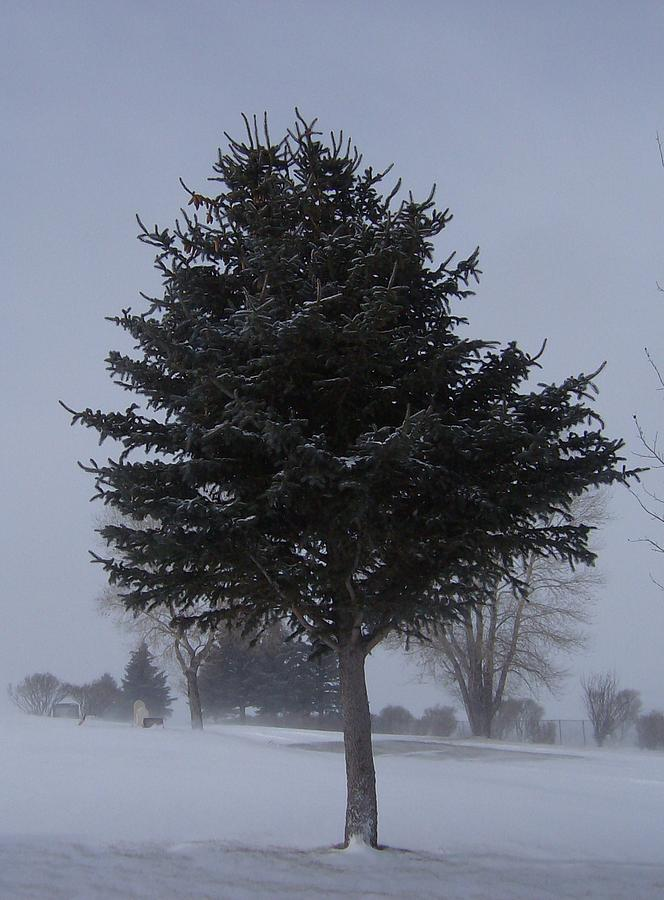 Snow Photograph - Tree In Snowstrom by Susan Pedrini