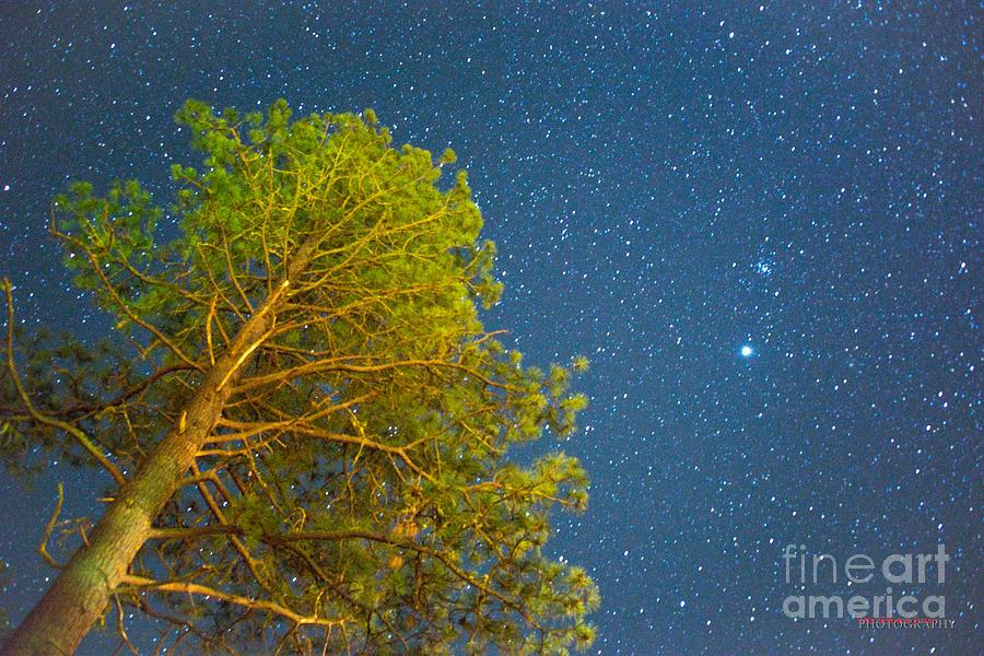 Tree in Space by Don Edward Jones