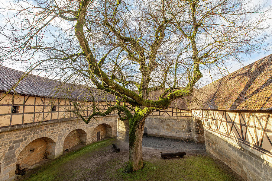 Landscape Photograph - Tree in the Courtyard by M C Hood