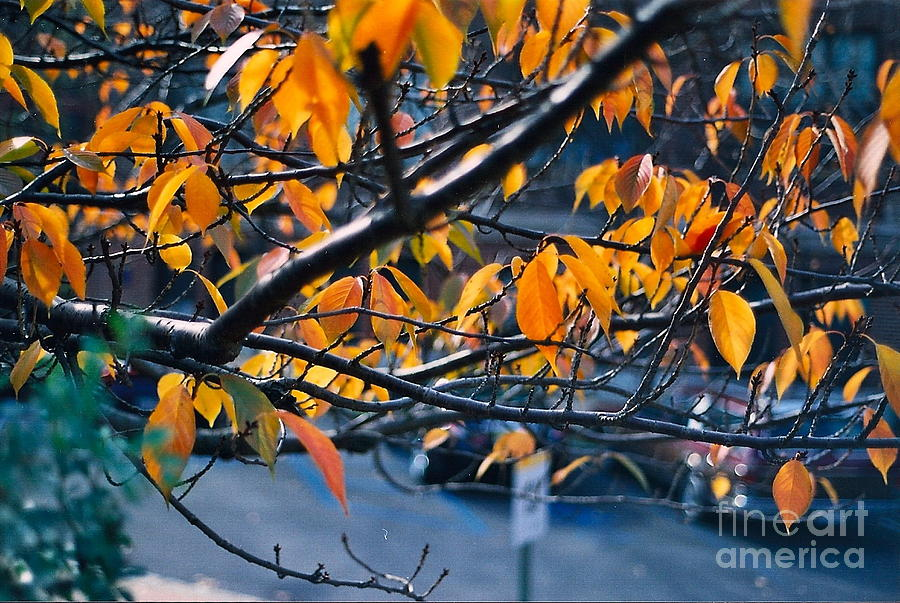 Fall Photograph - Tree In View by Simonne Mina