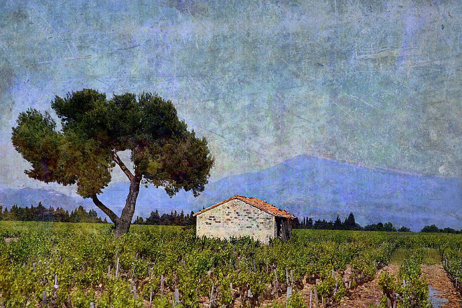Tree in Vineyard by Joselyn Holcombe