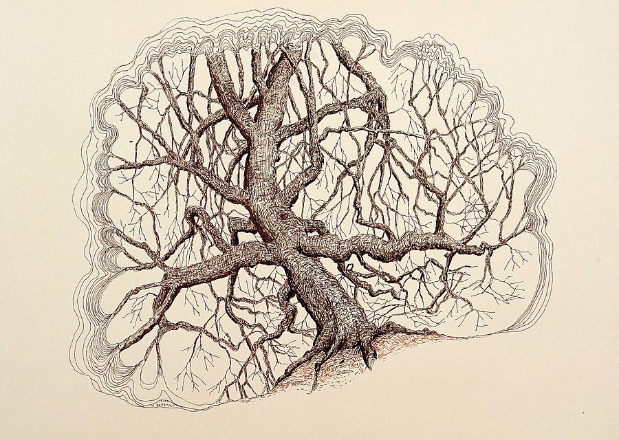 Tree Drawing - Tree In Winter II by Kerry Beverly