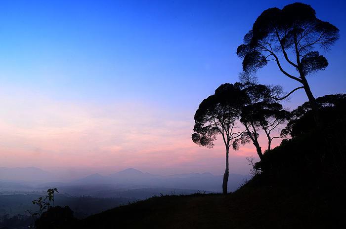 Tree Photograph - Tree by Irdan nofriza Nasution