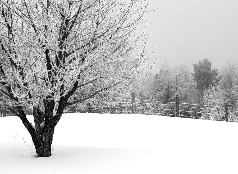 Frost Photograph - Tree by Jessica Wakefield