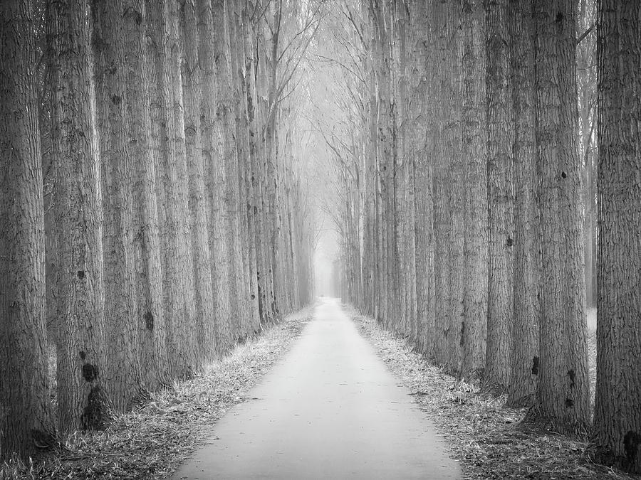 Tree Photograph - Tree Lane by Wim Lanclus