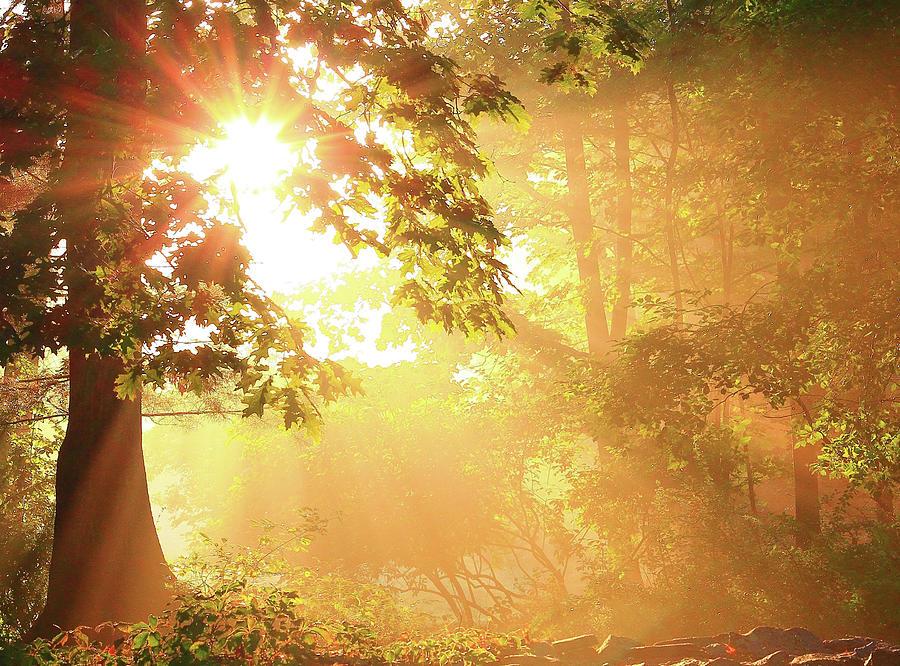 Tree Photograph - Tree Light-gods Rays by Brian Pflanz