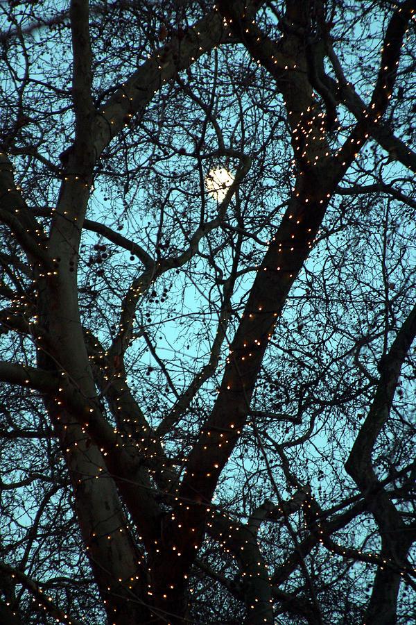 London Photograph - Tree Light by Jez C Self
