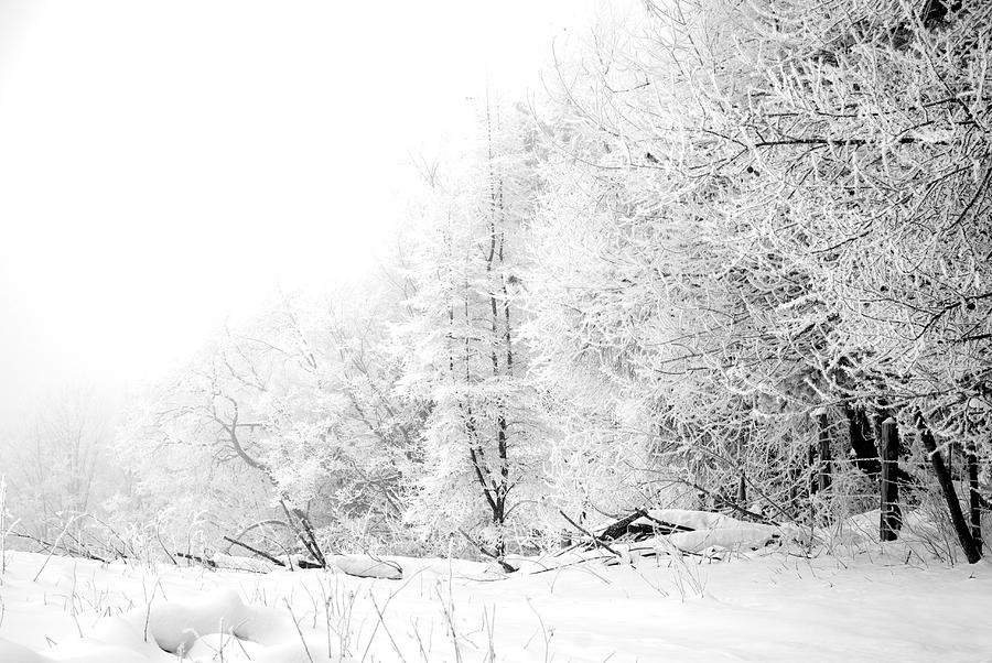 Frost Photograph - Tree Line by Jessica Wakefield