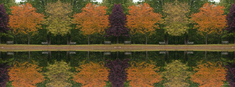 Tree Photograph - Tree Line by Randy Ricketts