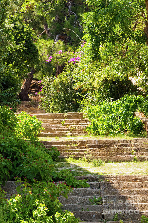 Princes Islands Photograph - Tree Lined Steps by Bob Phillips